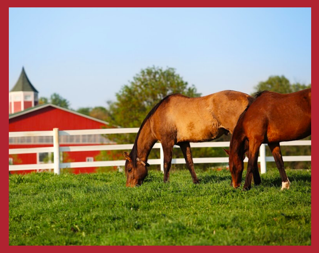 Madison Fields | Horse Breeds Activity